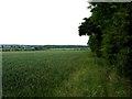 SK6960 : Field edge westwards by Andrew Tatlow
