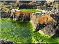 O2628 : Rock Pools by Doug Lee