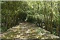 SX5550 : Yealmpton: course of railway by Martin Bodman