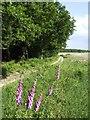 SY7493 : Summer on Egdon Heath by Jonathan Billinger