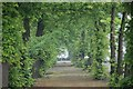 NS8892 : Lime Tree Walk by Paul McIlroy