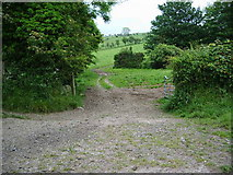 NY2039 : Track off the Torpenhow to Whitrigg road by Alexander P Kapp