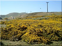 SH7783 : Gorse on the Great Orme by Trevor Rickard