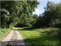 SY3699 : Hawkchurch Footpath 16 by Derek Harper
