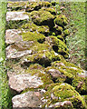 SO5719 : Mossy wall, Goodrich Castle stables area by Pauline E