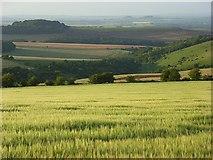 SU5482 : Barley, Lowbury Hill by Andrew Smith