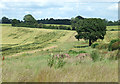 SO6093 : Fields near Weston, Shropshire by Roger  Kidd