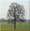 SE4105 : Isolated tree. by Steve  Fareham