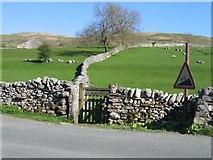 SD9163 : Stone Walls and Pasture near Gordale Bridge by John S Turner
