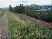 SO7641 : Western flank path on Pinnacle Hill by Trevor Rickard