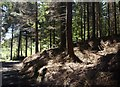 SX2297 : Hams's Wood by Derek Harper