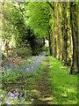 SE3103 : Lady Lucy's walk. by Steve  Fareham