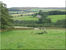 NY9449 : The valley of Beldon Burn (4) by Mike Quinn