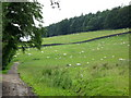 NY9449 : Pastures and Whitehill Plantation near Newbiggin (2) by Mike Quinn