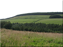 NY9449 : The valley of Beldon Burn (5) by Mike Quinn