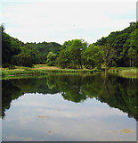 SE5584 : Nettle Dale Reflections by Scott Robinson
