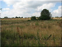 TG1422 : Farmland near Crow Hall by Evelyn Simak