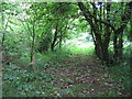 ST6836 : Footpath from Henley Grove Farm by Phil Williams