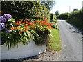 SN1712 : Floral display on Ash Lane, Tavernspite by Jonathan Billinger