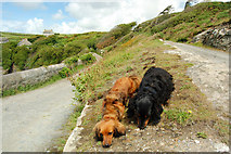 SW5527 : Cornish coast path at Bessy's Cove by Mari Buckley