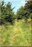SU0348 : Ancient Trackway by David Davies