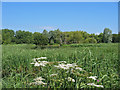 ST4286 : Pond at Magor Marsh Nature Reserve Monmouthshire. by Clive Perrin