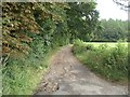 TF9726 : Track along southern edge of Lodge Wood, Sennowe Park by Nigel Jones