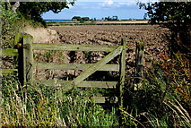 NU2106 : Field near Sturton Grange by Roger Temple