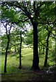 SJ9150 : View Out of Bagnall Woods by Debbie Turner