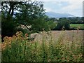 SO8037 : Fields near Hillend Court by Trevor Rickard