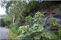 SJ2889 : Foliage and geology by Fractal Angel