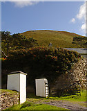 V6490 : Looking up at Ross-behy by Linda Bailey