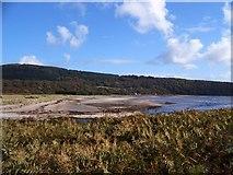 NR9666 : Kilbride Bay by Margot Manson