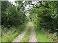 SJ2434 : Bridleway in Craignant Wood by John Haynes