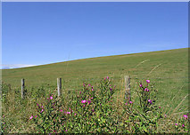 NU0112 : Hill grazing west of Great Ryle by Walter Baxter