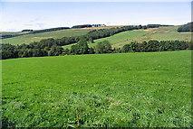 NU0012 : Lush pasture field by Walter Baxter