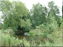 SJ7143 : Pond in garden by charles c