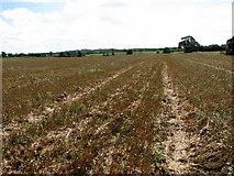 TG1440 : Stubble on field near Mill Farm by Evelyn Simak