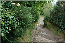 J4772 : Path, Killynether Wood (2) by Albert Bridge
