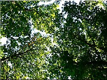 SU2265 : Savernake Forest by Brian Robert Marshall