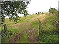 NY5075 : Field near Dodgsontown by Oliver Dixon