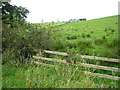 NY5173 : Field near Mossthorn by Oliver Dixon