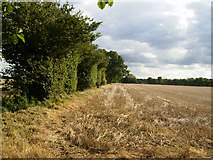 SE4937 : Stubble field and tree hedge south of Patefield Wood by Phil Catterall