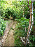 TQ0950 : Bridleway in Mountain Wood by Colin Smith