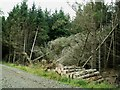NY4677 : Keeled over trees near Liddel Park by Rose and Trev Clough