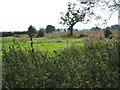 SJ5330 : Land near Lacon Hall by Peter Fleming
