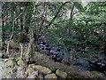 SH9715 : Afon Twrch by Oliver Dixon