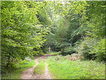 TQ1350 : Ranmore Common Bridleway by Colin Smith