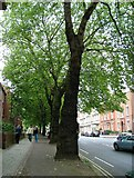 SK3436 : London Plane trees - Friar Gate, Derby by J147