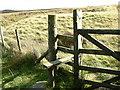 SD7422 : Stile Edgerton Moss by liz dawson